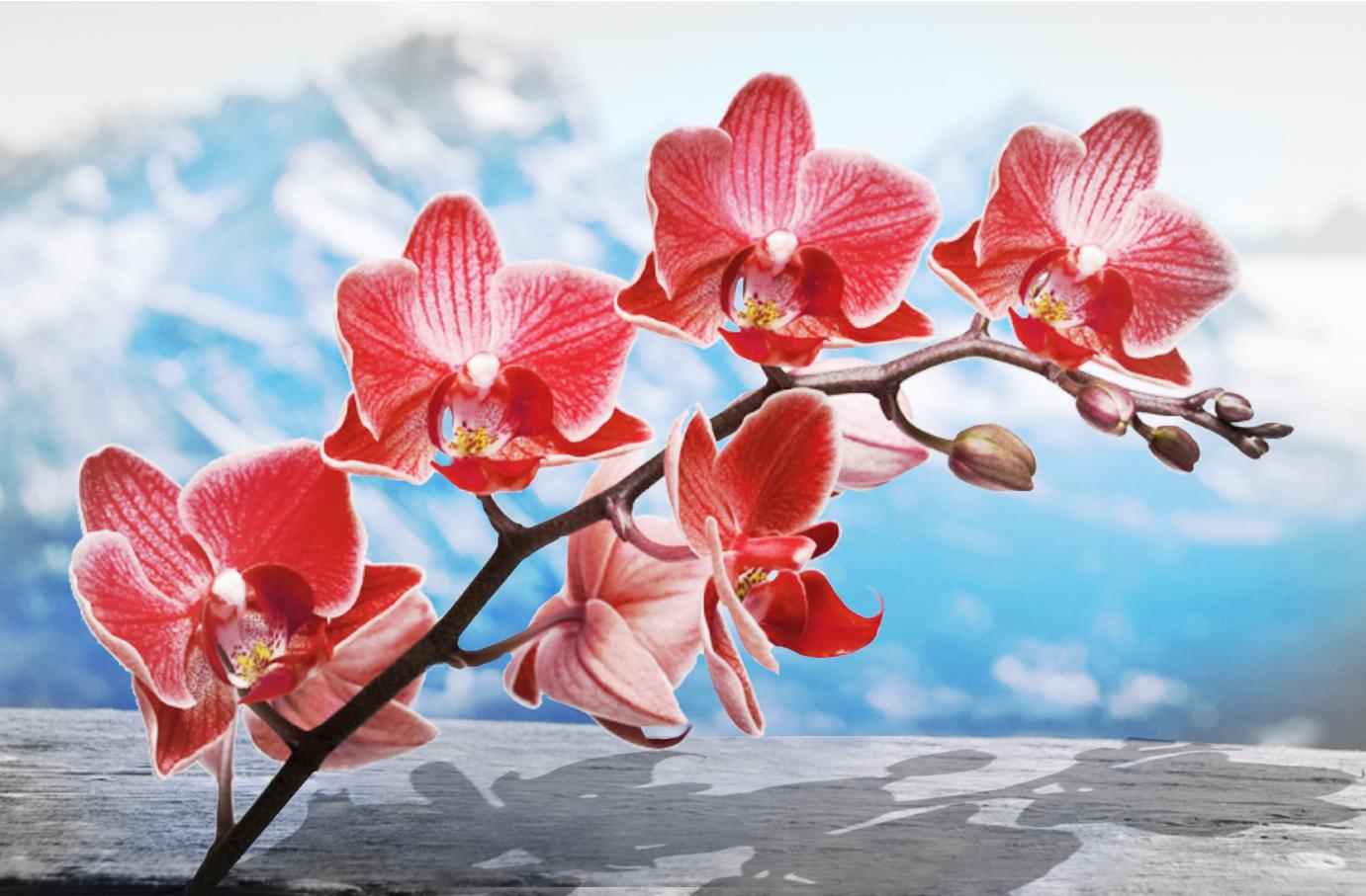 Orchidea: Fiore Del Nord Europa