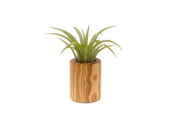 Wood Jar Cilindro