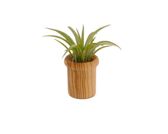 Wood Jar Tube