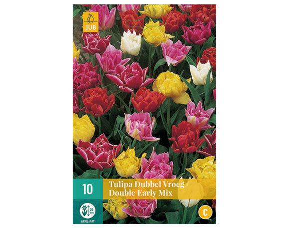 Tulipano Doppio Precoce
